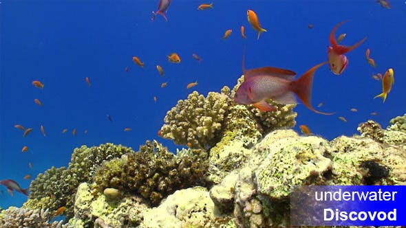 Thumbnail for Colorful Fish On Vibrant Coral Reef Static Scene 4