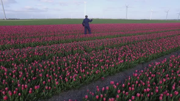 Thumbnail for Tulip field