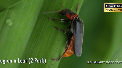 Bug On A Leaf (2-Pack)