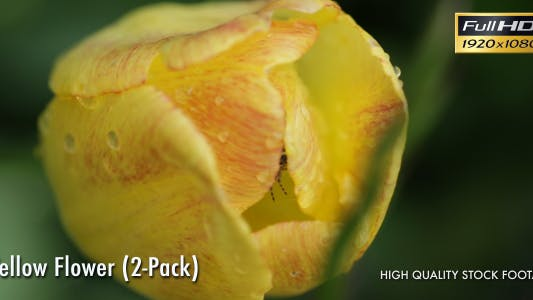 Thumbnail for Yellow Flower Macro (2-Pack)