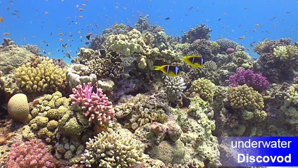 Thumbnail for Colorful Fish On Vibrant Coral Reef Static Scene 5