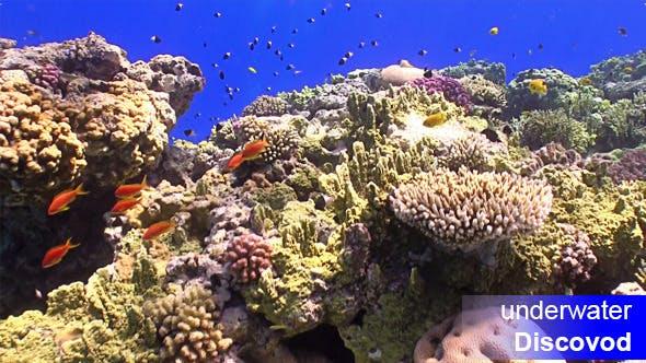 Thumbnail for Bunte Fische am lebendigen Korallenriff 45