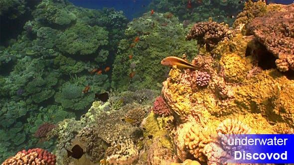 Thumbnail for Bunte Fische am lebendigen Korallenriff 46