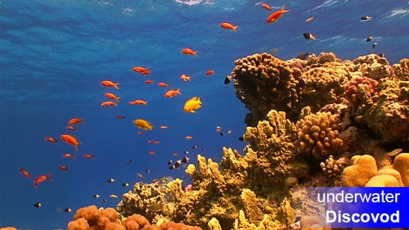 Thumbnail for Colorful Fish on Vibrant Coral Reef 49