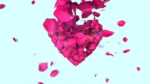 Blütenblätter Herz