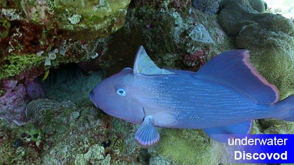 Thumbnail for Bunte Fische am lebendigen Korallenriff 54