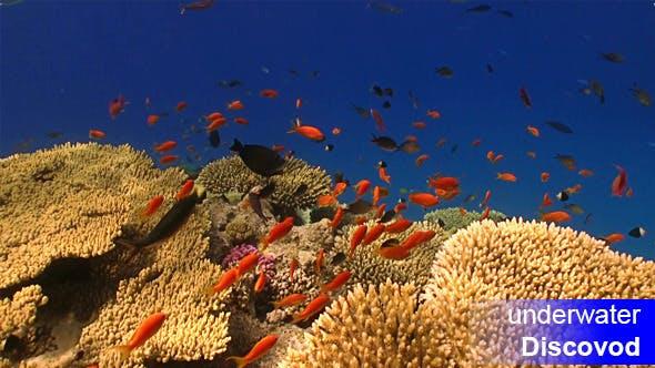 Thumbnail for Bunte Fische am lebendigen Korallenriff 53