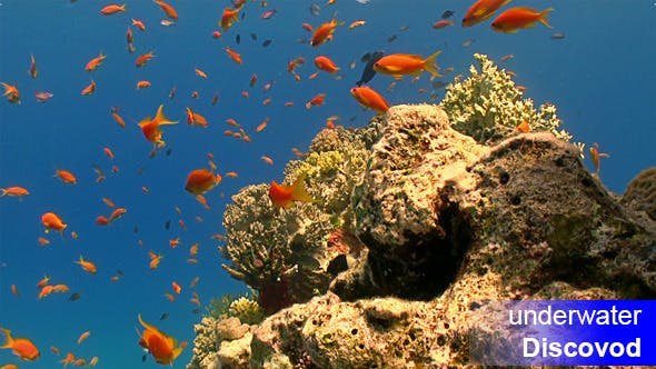 Thumbnail for Bunte Fische am lebendigen Korallenriff 57