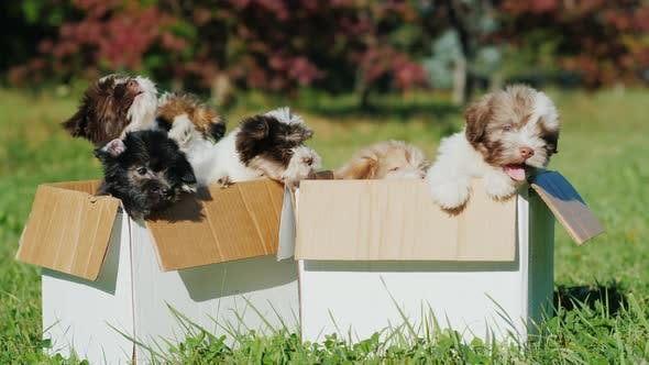 Cover Image for Lovely Puppies in the Box