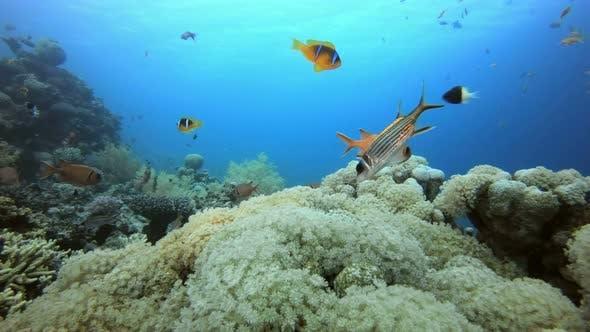 Thumbnail for Clownfish and Marine Garden