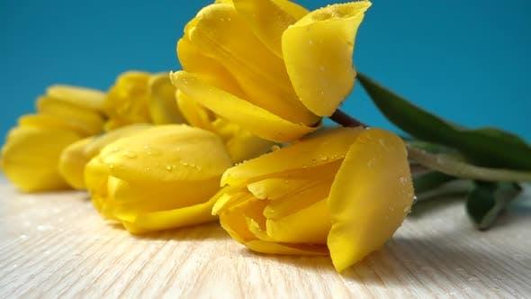The Falling Tulips