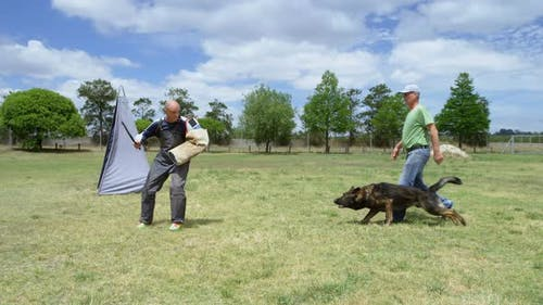 Trainer training a shepherd dog in the field