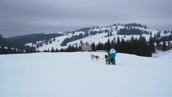 Thumbnail for Dog sled ride in the mountains