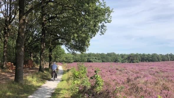 Elderly people cycling through flowering heather