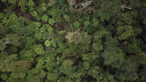 Top-down view of rainforest