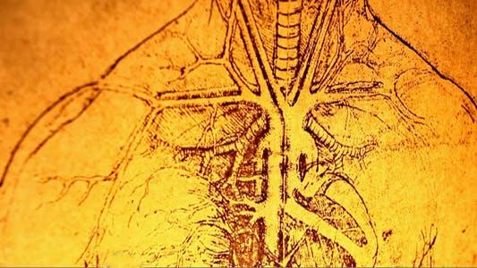 Thumbnail for Anatomy Art 7