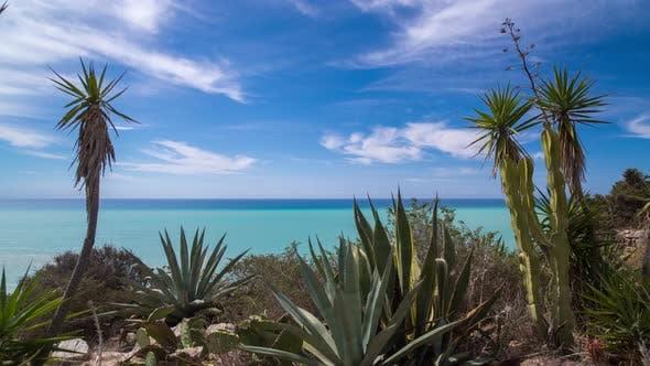 Thumbnail for sicily sea coast cactus wildlife fauna