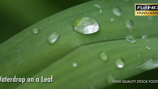 Thumbnail for Waterdrop On A Leaf