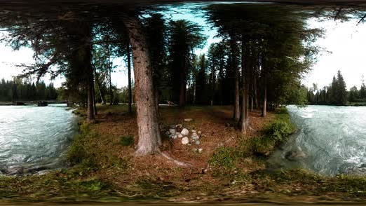 Thumbnail for 360 VR Virtual Reality of a Wild Forest. Pine Forest, Small Fast, Cold Mountain River. National Park