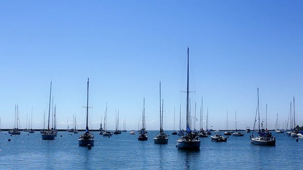 Many Sail Boats and Masts in a Marina 2