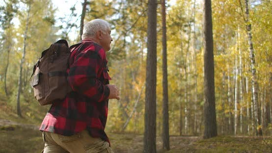 Thumbnail for Hiker Is Walking Alone in Picturesque Birch Grove at Autumn, Backpacker Is Strolling Between