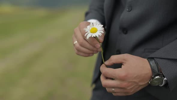 Thumbnail for Close Up of Businessman Hand with Wild Chamomile. Romance, Feelings