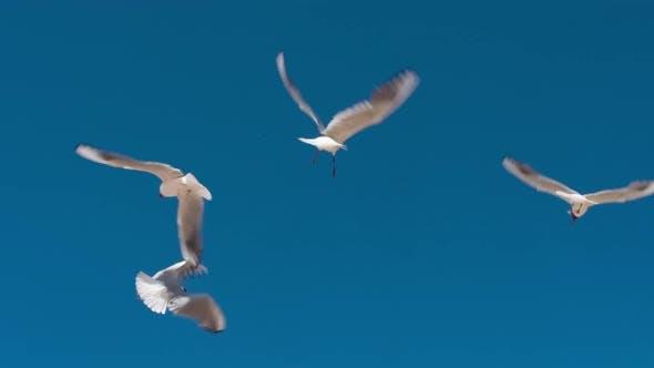 Seagulls Illuminated Bright Sun