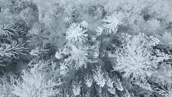 Thumbnail for Aerial Top Down View of Winter Fitr Forest in Russia