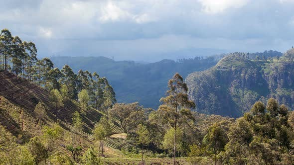 Thumbnail for Mountains Tea Plantations Timelapse