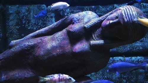 Aquarium and Antique Age Statue