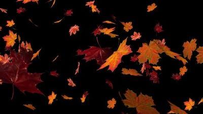 Maple Leaves 02 Hd
