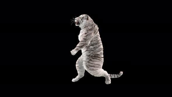 Thumbnail for White Tiger 4K