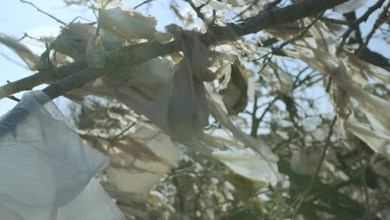 Thumbnail for Plastic Trash on the Branches of Trees. Plastic Pollution of the Planet. Closeup.