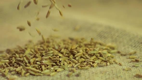 Thumbnail for Organic Rye Grain Falling on Sack Cloth