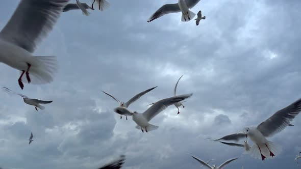 Thumbnail for Flock Of Seagulls Fly Overhead Slow  Motion 9