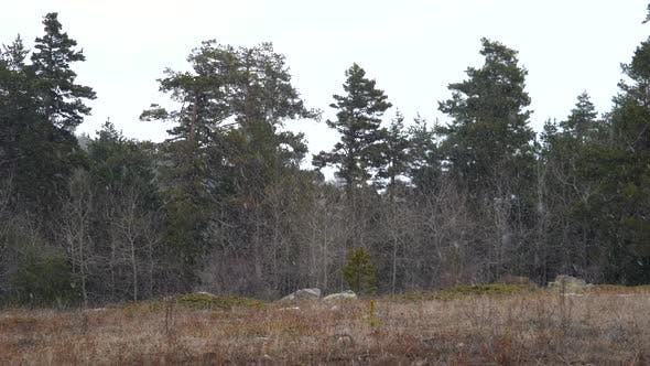 Thumbnail for Beginning Snowfall in Natural Branches Forest