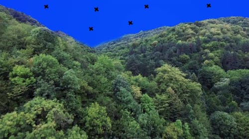 Fly Over Forest Blue Screen
