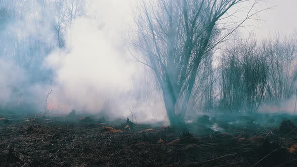 Thumbnail for Fire in the Forest. Burning Dry Grass, Trees and Reeds. Wildfire. Slow Motion.