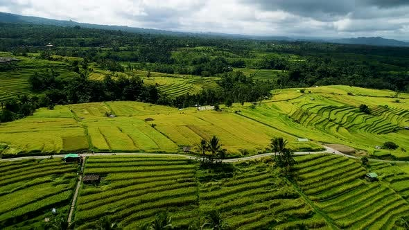 Thumbnail for Rice Fields on Bali