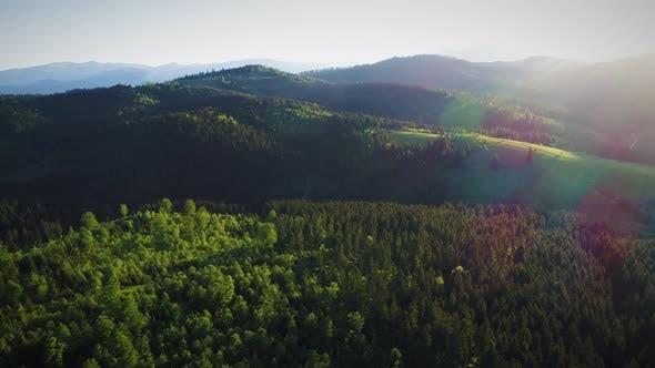 Thumbnail for Sunshine Over Green Forest