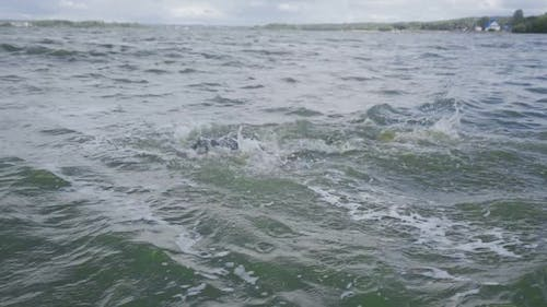 Professional Swimmer Triathlete in a Wetsuit Swims in Open Water Triathlon Competition