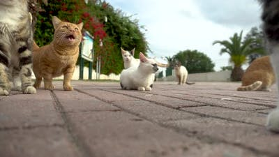 Stray Cats on the Street. Cats of Different Breeds Run on the Street. Cats Walk Towards the Camera