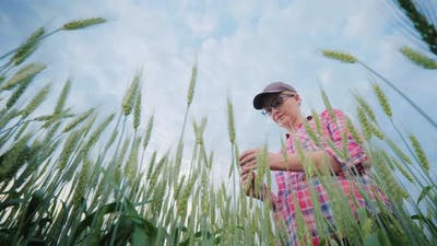 A Woman Agronomist Studying Wheat Shoots