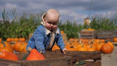 A Day at Pumpkin Patch