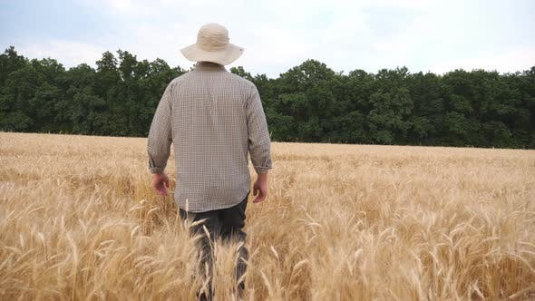 Thumbnail for Rear View of Male Farmer Going Through the Barley Field and Exploring Golden Plantation. Young
