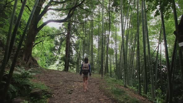 Thumbnail for Girl Traveler with Backpack Walking Along the Path Tropical Forestntrees, Ferns, Bamboo Grove