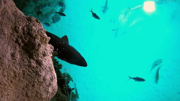 A Shark and other Fish