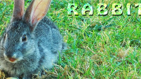 Cover Image for Rabbit