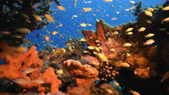 Thumbnail for Underwater Tropical Reefs Seascape