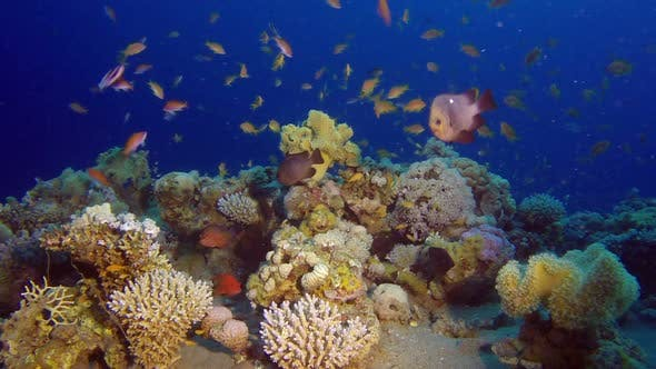 Cover Image for Underwater Colorful Reef at Night Dive